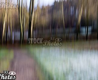 abstract image forest