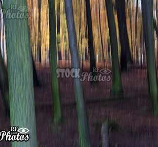 abstract image trees of forest