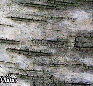 background image bark