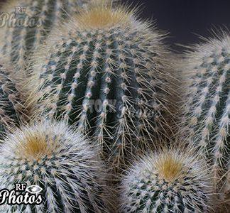 cacti & Kakteen